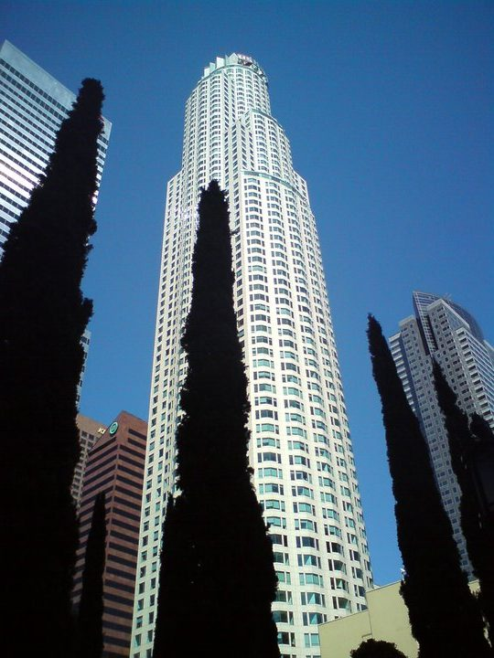 An image of strong vertical lines formed by trees and buildings